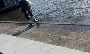 Dog Dragged Out of Water by Good Samaritan