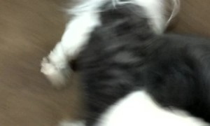 Dogs Super Excited to See Their Furdad