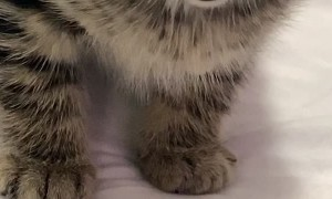 Kitten's Cute Reaction to Being Called Names