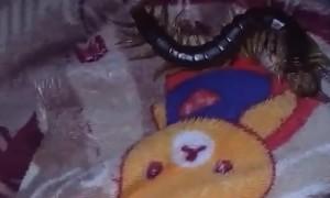 Large Centipede Found in Blanket