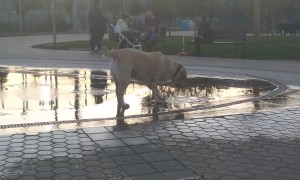 Dog Playing with Water Fountain in Bulgaria