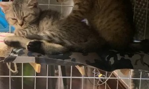 Kitty Massages His Brother's Stress Away