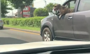 Stylish Dog Enjoys Car Ride on a Sunny Day
