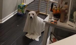 House Haunted by Ghost Doggy