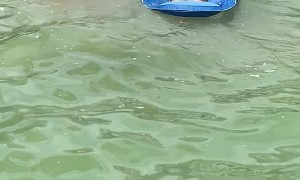 Golden Retriever Tows His Aunt to Shore