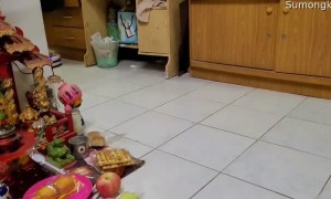 Snake Rides on Robotic Vacuum