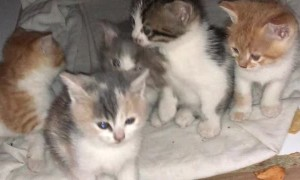 Kittens Pour Out of Pot to Say Good Morning