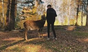 Falling Off a Deer