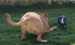 Bunny Rabbit and Dog Playing Together