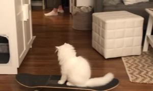 Yeti the Skateboarding Cat