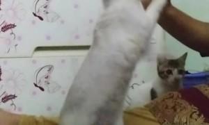 Rabbit Doing Tricks
