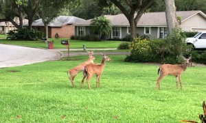 Momma Deer Disciplines Naughty Fawn