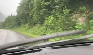 Bear Races Across Road in Front of Car