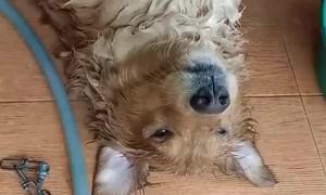 Happy Dog Loves a Good Bath