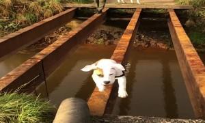 Hesitant Doggy Needs Help Crossing Bridge