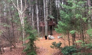 Bear in Bedford Climbs into Treehouse