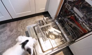 Clever Doggy Learns to Load Dishwasher