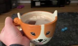 Corgi Has Concerns About Human's Mug