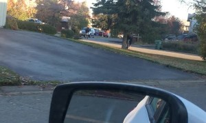 Moose Slips while Running Through Neighborhood