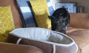 Cat Takes Couch over New Bed