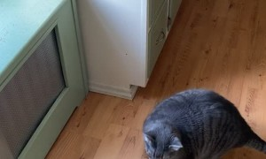 Chunky Kitty Is Hesitant to Make the Jump