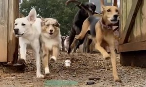 A Stampede of Happy Dogs