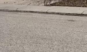 Bobcat Casually Strolls Along Street