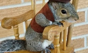 Little Squirrels Rocks in Rocking Chair