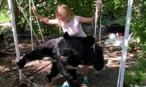 Himalayan Bear Loves His Swing