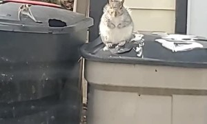 Startled Squirrel Jumps off Trashcan