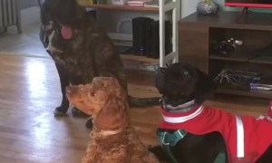 Disciplined pups go through doggy training at daycare