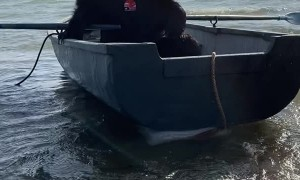 Archie the Brown Bear Rows His Boat