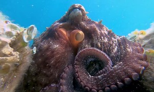 Close Encounter with an Octopus
