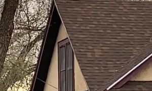 Strange Dog Barks on Rooftop