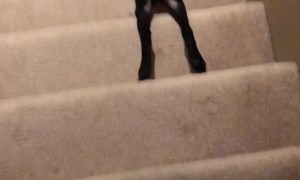 How My Dog Goes Down Stairs