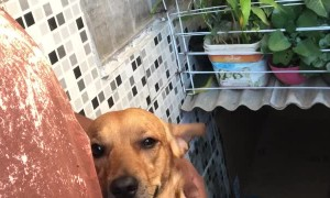 Dog Has a Hard Time with Goodbyes