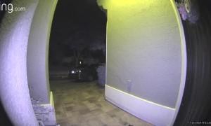 Woman Opens Door to a Big Furry Surprise