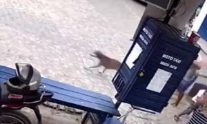 Excited Dog Drags Skirt Down
