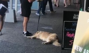 Doggo Needs Motivation to Continue Walk