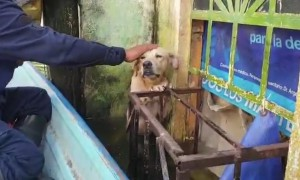 Mexican Navy rescues dog trapped in Tabasco floods
