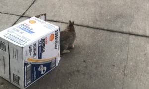 Rabbit Freed From Car and Released