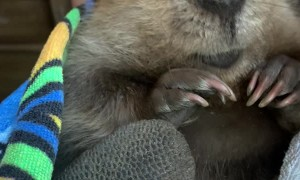 Baby Beaver Beeps