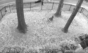 Man Chases Dog Around Yard