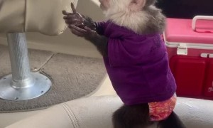 Baby Monkey Playing with Water