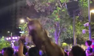 Happy Husky Hoisted onto Shoulders During Gathering