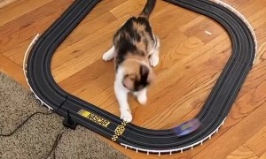 Kitty Catches Toy Car on Track