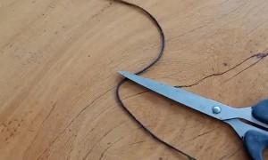Horse Hair Worm Slithers along Floor