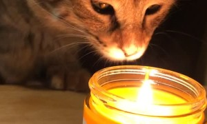 Curious Kitty Discovers Her First Candle