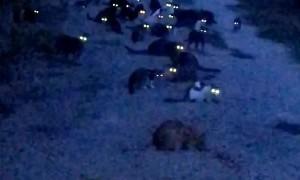Glowing Kitty Eyes Glare Back at Man