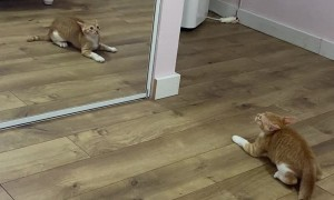 Kitten Realizing how Handsome he is looking in the Mirror